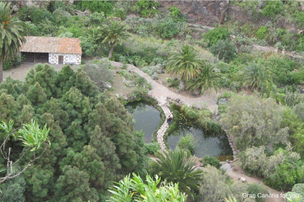 jardin-botanico-canario-2