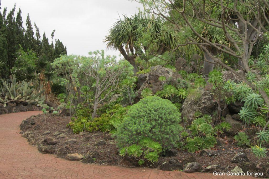jardin-botanico-canario-3