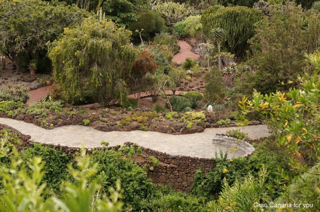 jardin-botanico-canario-7