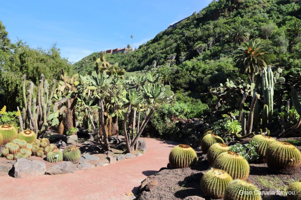jardin-botanico-canario-9