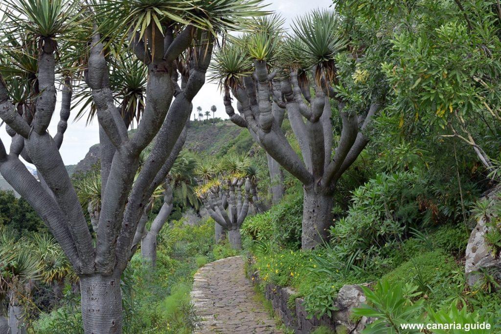 Flóra Kanárskych ostrovov